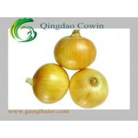 Yellow onions Manufactures