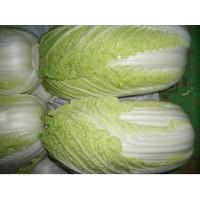 Cabbages Manufactures