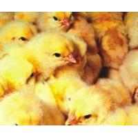 Biovit 3% TP for fattening chickens Manufactures