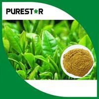 China Green Tea Extract(Polyphenol,Catechins,EGCG) on sale