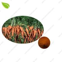 Carrot Powder Manufactures