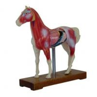 Horse Acupuncture Model 114 us Manufactures