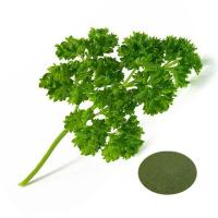 Buy cheap Food grade Parsley juice powder 333 from wholesalers