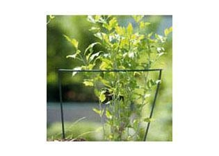 Quality Shrub Support for sale