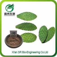 China Cactus Extract Powder, Factory Supply Pure Natural Cactus Powder, Cactus Extract Weight Loss on sale