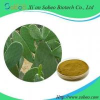 China Pure Natural Hoodia Cactus Extract powder for sale on sale