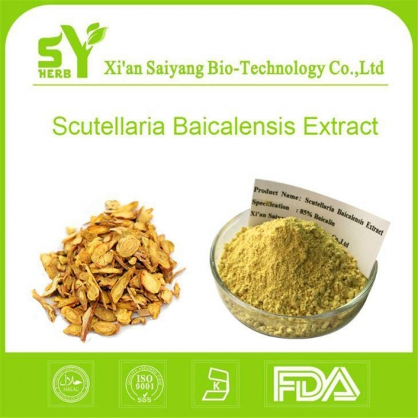 Quality Scutellaria Baicalensis Extract/ Organic Baikal skullcap Root Extract Powder Suppilers for sale