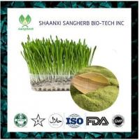 Buy cheap anti-cancer artificial best sale pure wheat grass p.e. from wholesalers