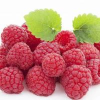 Raspberry Extract Manufactures