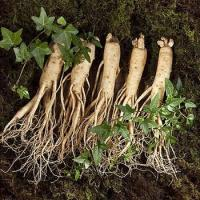 Panax Ginseng Root Powder Sale Manufactures
