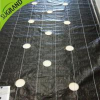 105gsm black ground cover/weed mat with holes for gardens