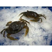 China Seafood Product name: Soft shell crab on sale