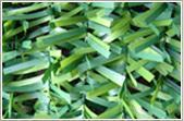 Buy cheap Hedge 2 from wholesalers