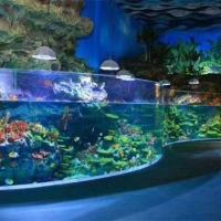 Buy cheap Curved Acrylic Fish Tank from wholesalers