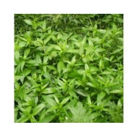 Buy cheap Andrographis Extract from wholesalers